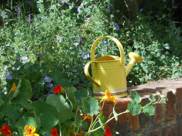 A watering can is great for a small job but a new collapsible watering hose is our go-to tool watering tool on job sites. Lightweight and space saving, they shrink up and fit into a medium sized mesh bag that we keep in our garden bag.   (Photo credit: Michael Coghlan)