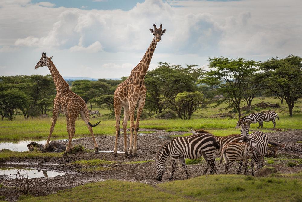 Africa TIF-1.jpg