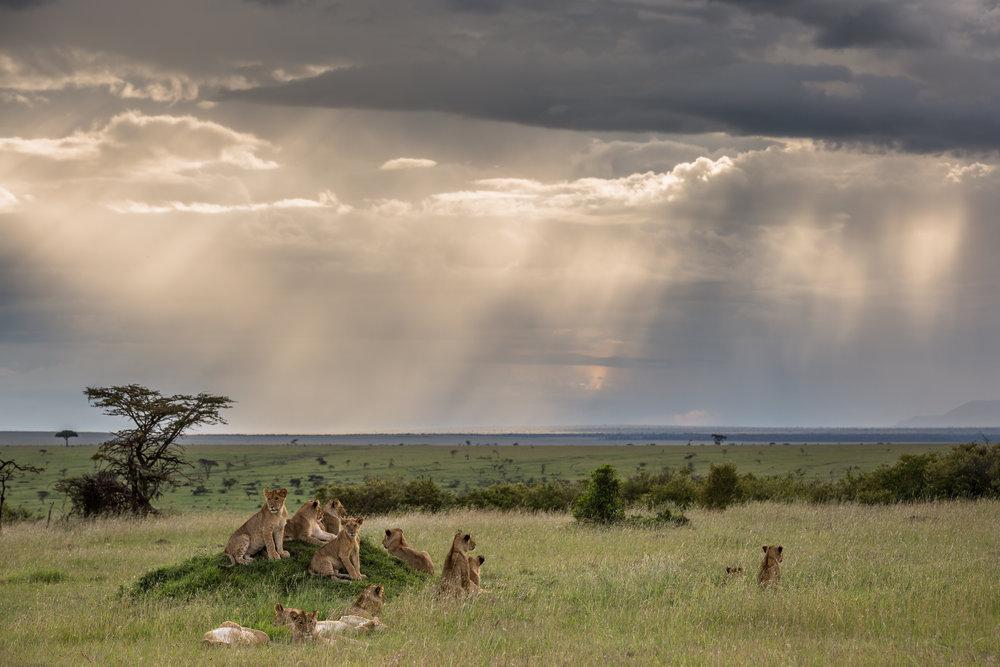Africa TIF-7.jpg