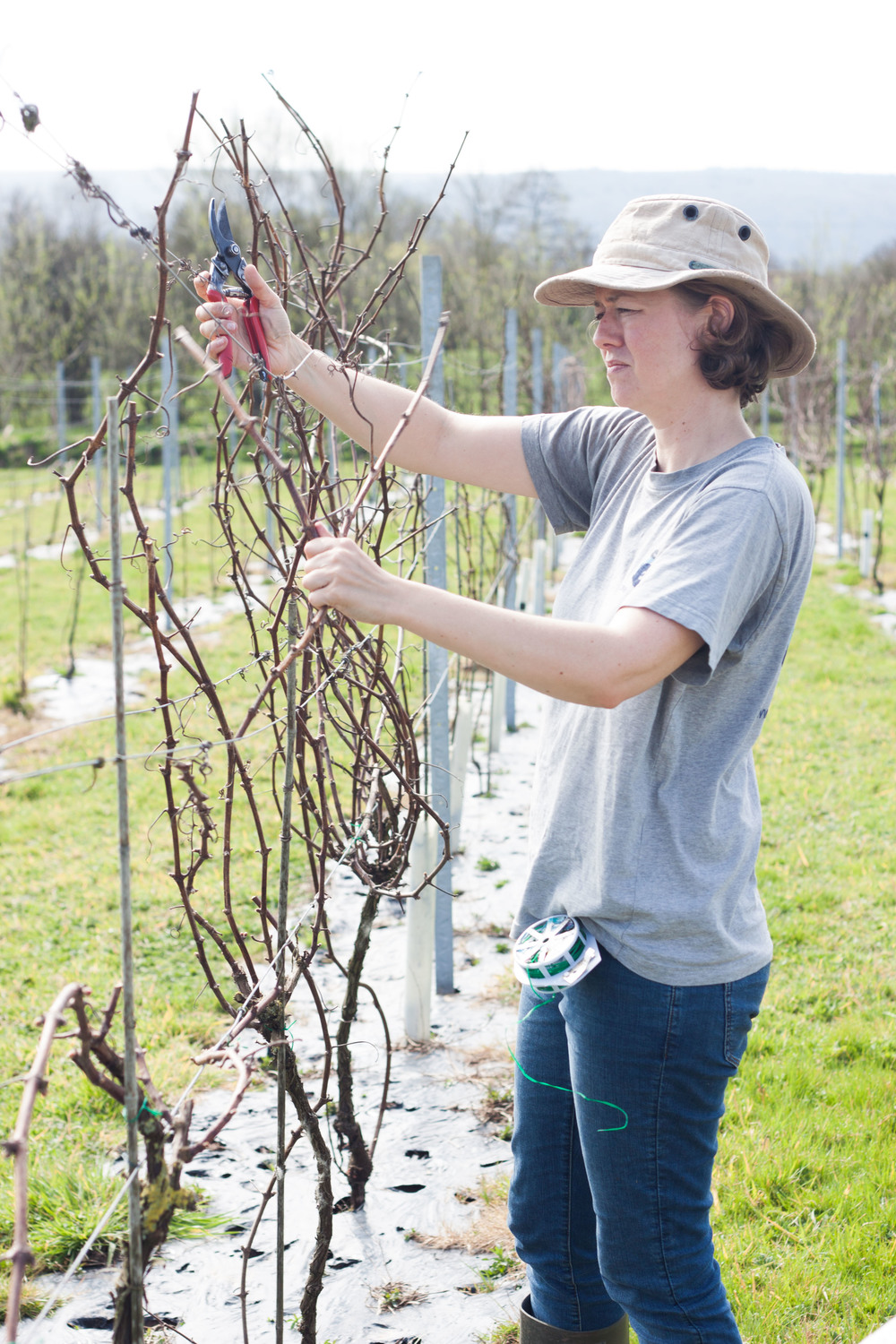 dunleavy_vineyards_pruning
