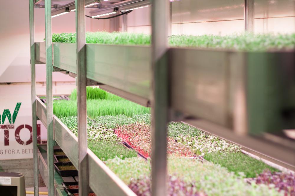 grow_bristol_hydroponics