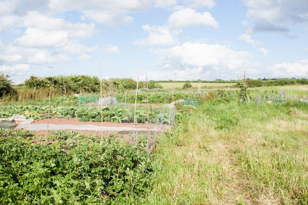 model_farm_allotments