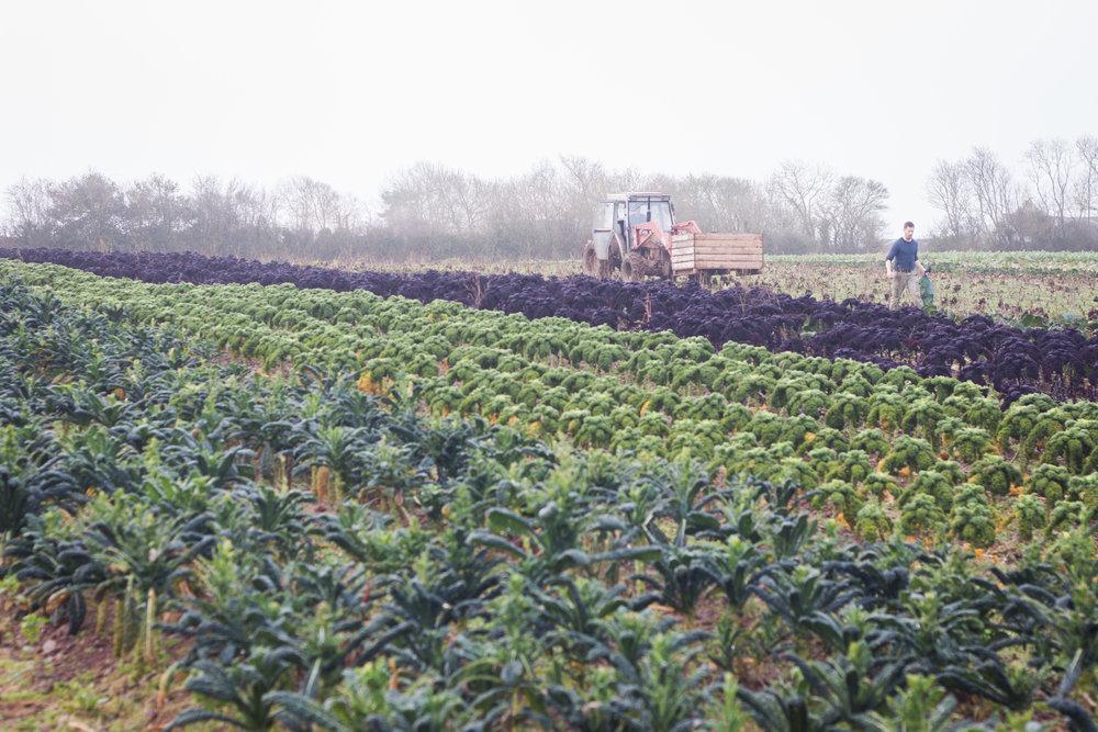 plowright_organic_harvesting