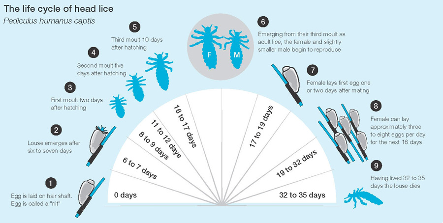 Lice Facts Lice Removal Remedies And Headlice Treatments