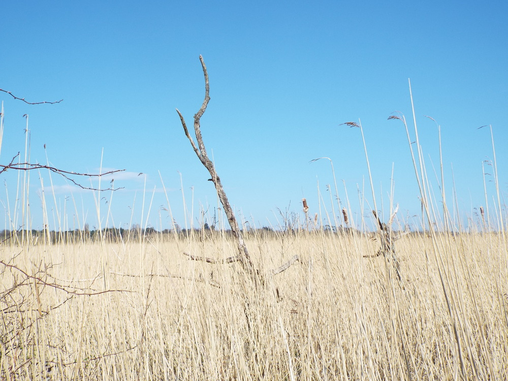 I took this photo when we were out for a walk along the marshes with us all and the dogs.