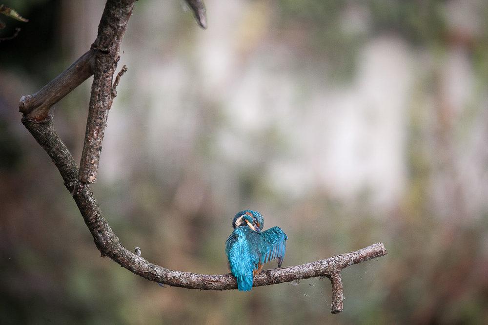 Photographe-lausanne-animalier-4.jpg