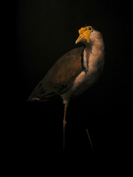 """Masked Lapwing"" (2012) Oil on panel, 16 x 12 in."