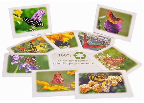 Box of 8 butterfly greeting cards bcdesign box of 8 butterfly greeting cards m4hsunfo