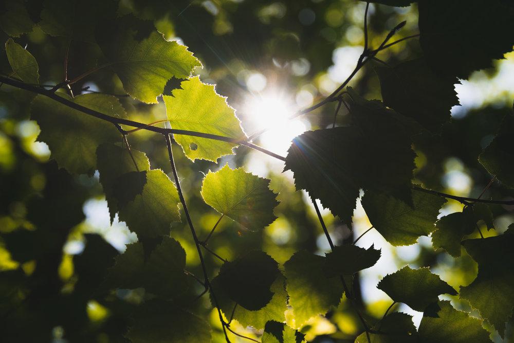 Be A Tree -