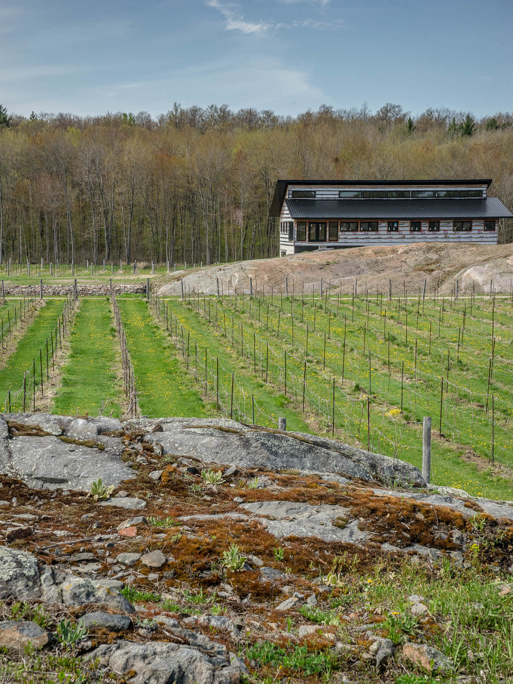 Many varietals were tried before finding the right grapes to thrive at Hastings County's first winery, which is currently open to to the public for tours, wine tastings, and purchases.  Photo by Gail Burstyn