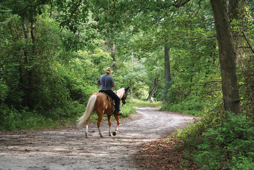 A solitary man on horseback settles in to enjoy a quiet ride in natural beauty. Photo courtesy Eastern Ontario Trails Alliance.