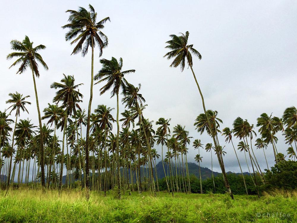 16_chaffee-kauai-01.jpg