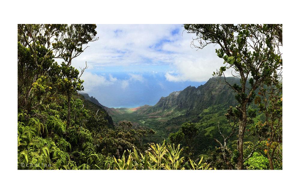 16_chaffee-kauai-09c.jpg