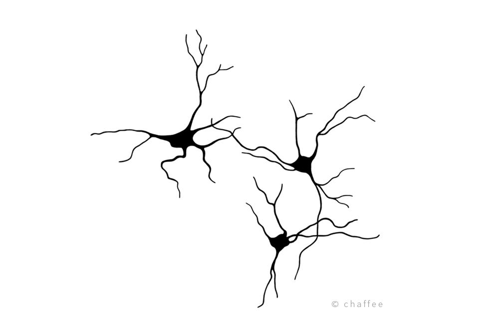 18_chaffee-neuron-3.png