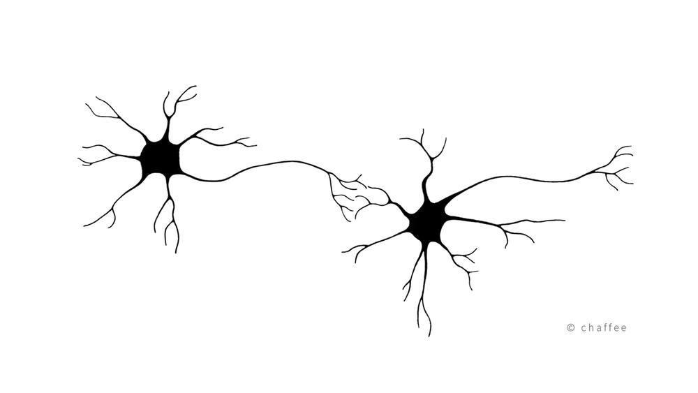 18_chaffee-neuron-4.png