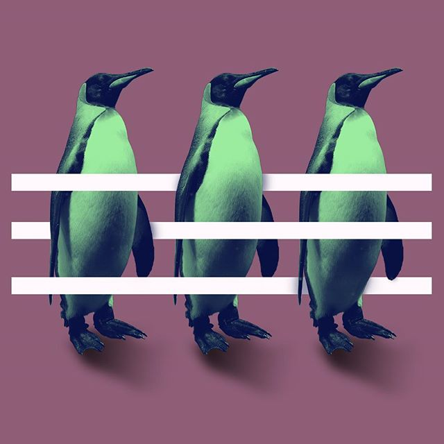 Really don't know what to say about this one, and what was the reason to  use penguins - I just did whatever came to my mind #photoshop #design #art #artwork