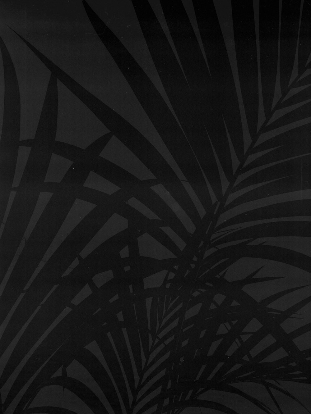 palm tree bw1.jpg