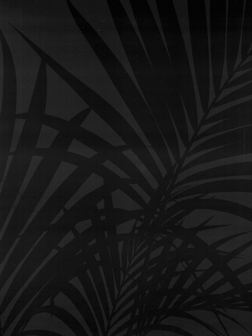 palm tree bw1.jpg