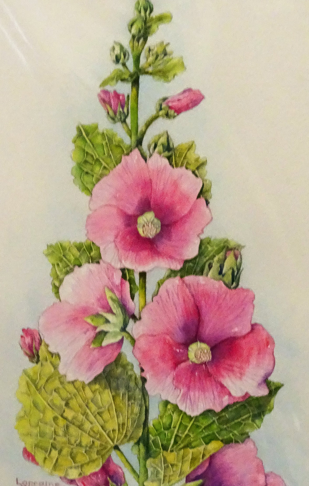 Hollyhocks by Lorraine Winchester