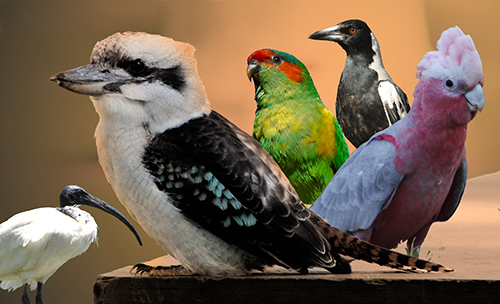 birdsp.jpg