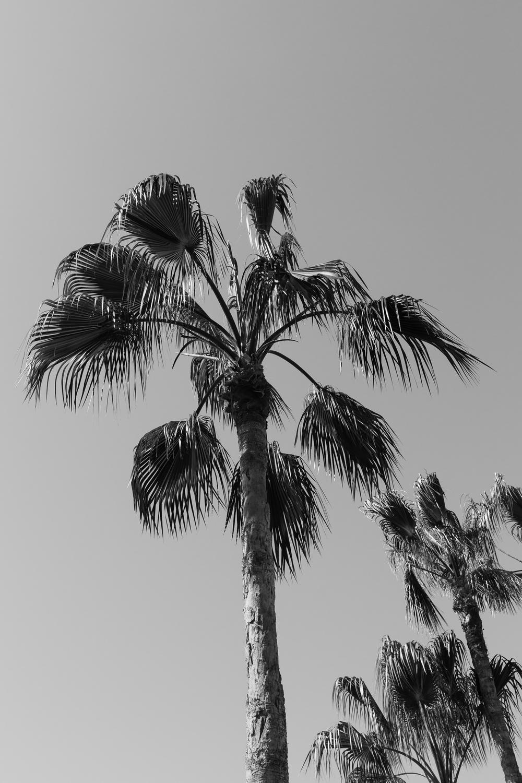 2013_0324_5D3_Cabo_0307.jpg