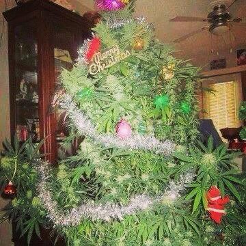 christmas_bud.jpg IMG_199612.