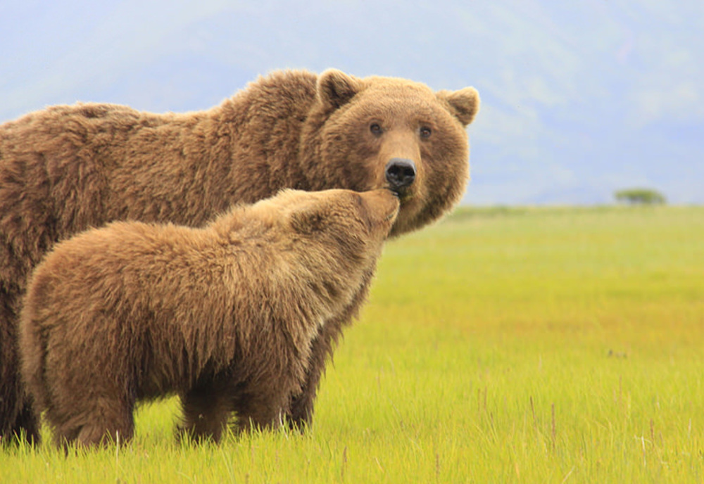 Kodiak to Katmai, USA | photo Natural Habitat Adventures