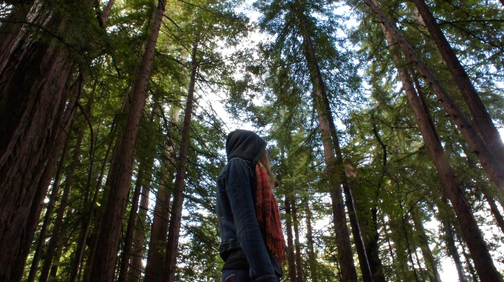 My wife Jaime admiring the towering redwoods in Pfiefer State Park