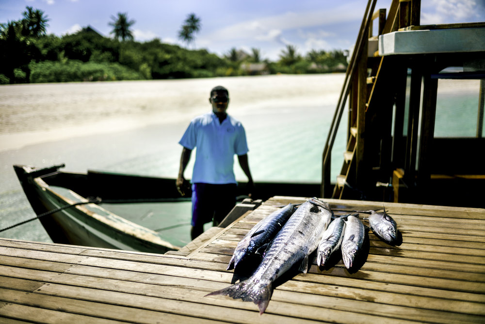 The fish for guests is line caught locally. Ghost net fishing is what has endangered the turtles of the Maldives.