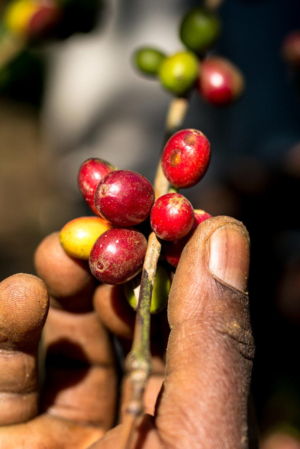 Ethiopia - Alan Schaller-20.jpg