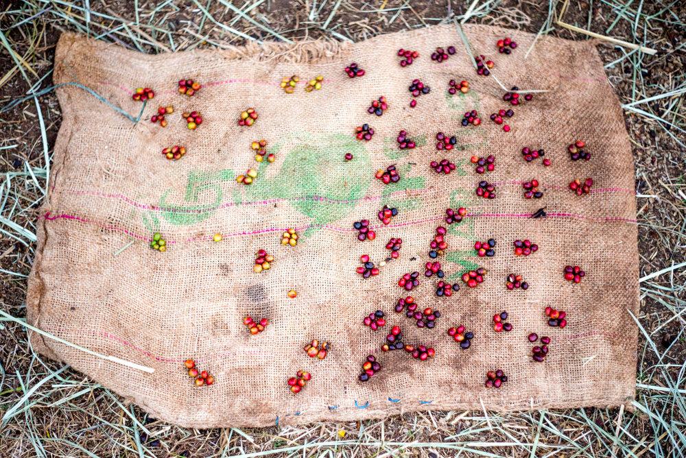 Ethiopia - Alan Schaller-122.jpg