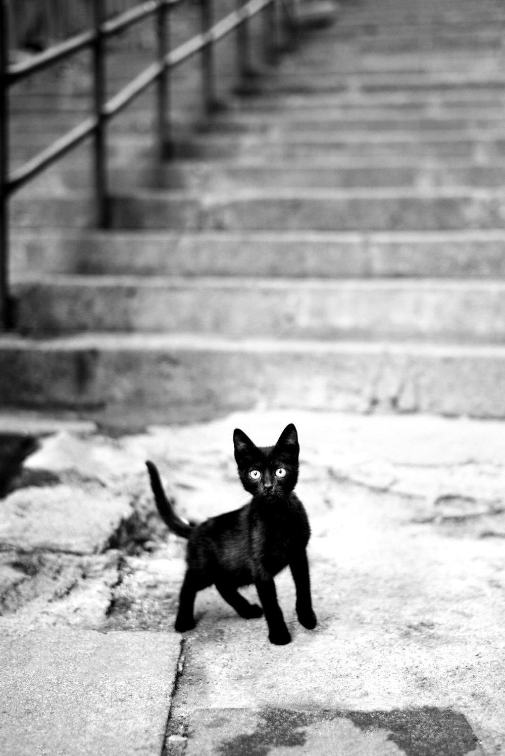 Alan Schaller - Street Photography International 33.jpg