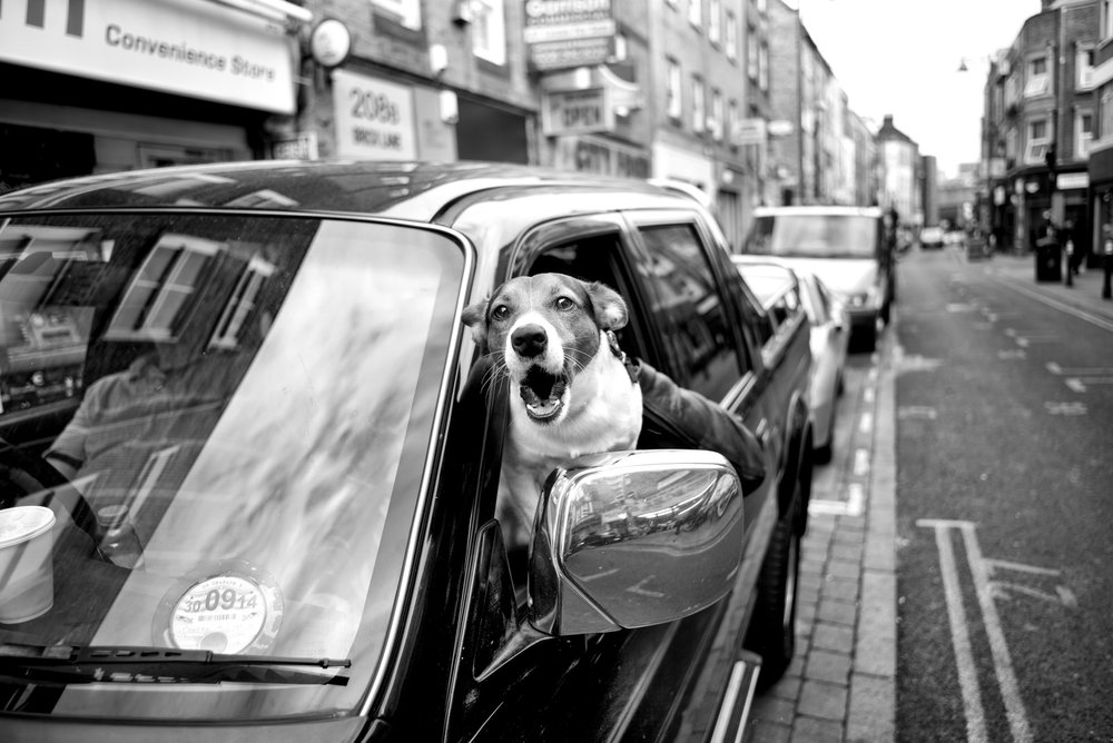 Alan Schaller - Street Photographer - Dogs 2.jpg