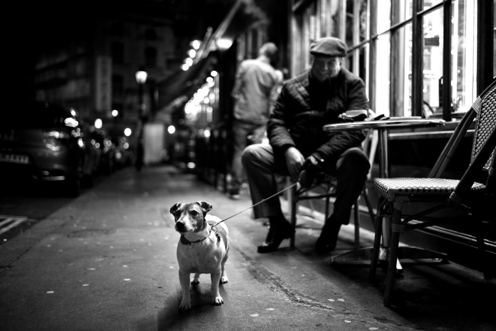 Alan Schaller - Street Photographer - Dogs 1.jpg