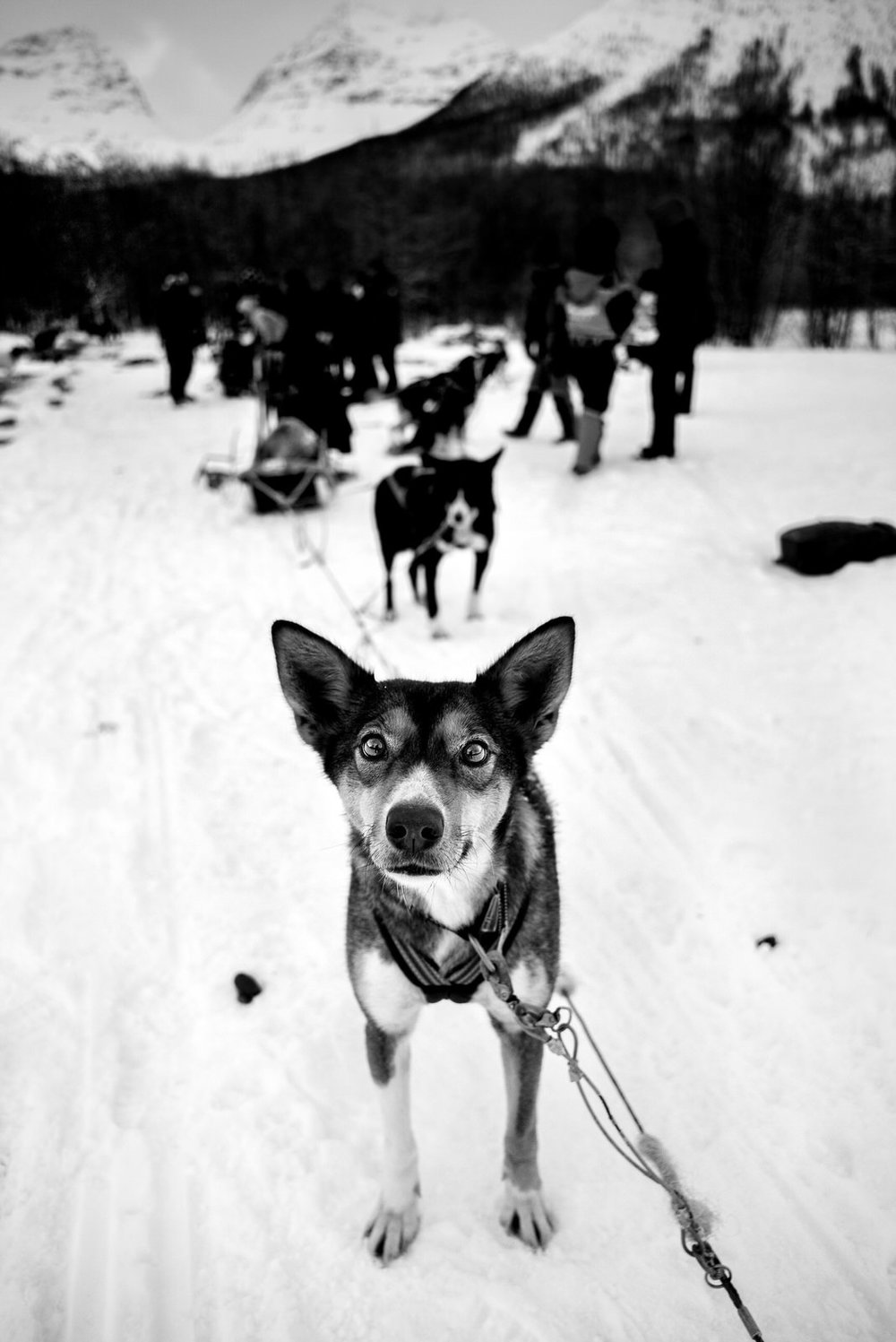 Alan Schaller - Street Photographer - Dogs 5.jpg