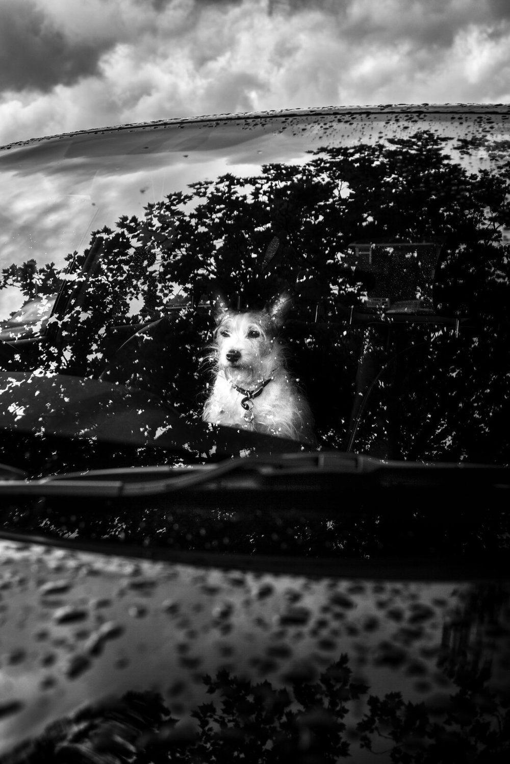 Alan Schaller - Street Photographer - Dogs 9.jpg