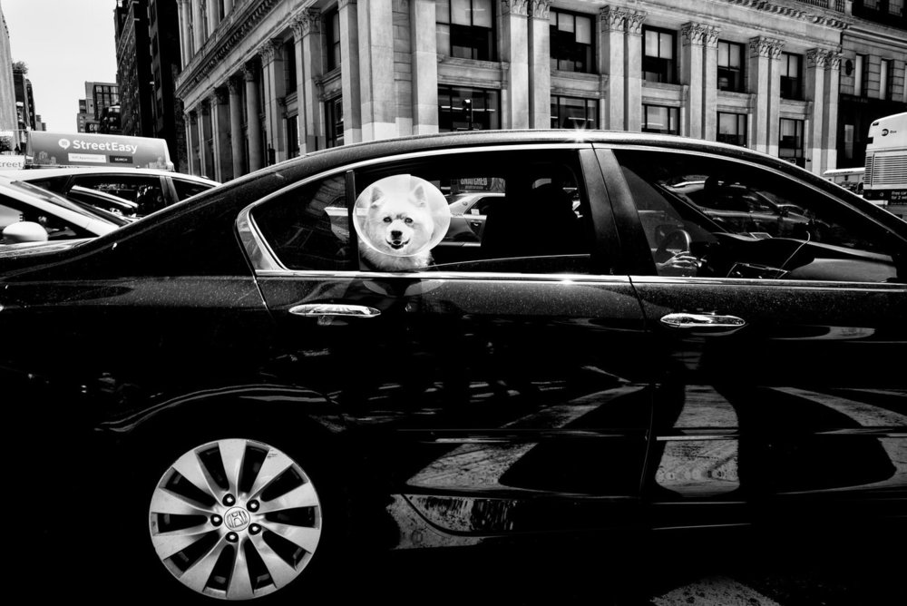Alan Schaller - Street Photographer - Dogs 10.jpg