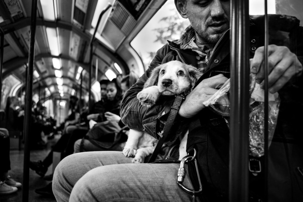 Alan Schaller - Street Photographer - Dogs 11.jpg