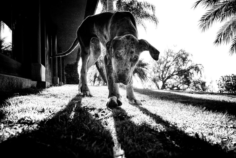 Alan Schaller - Street Photographer - Dogs 13.jpg