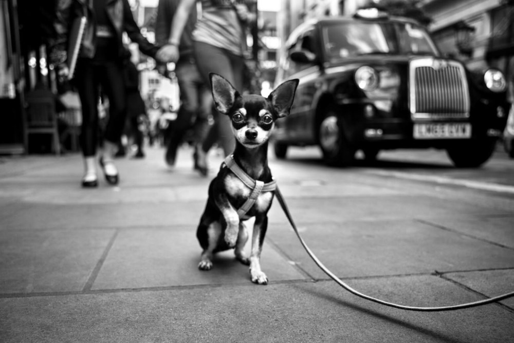 Alan Schaller - Street Photographer - Dogs 15.jpg