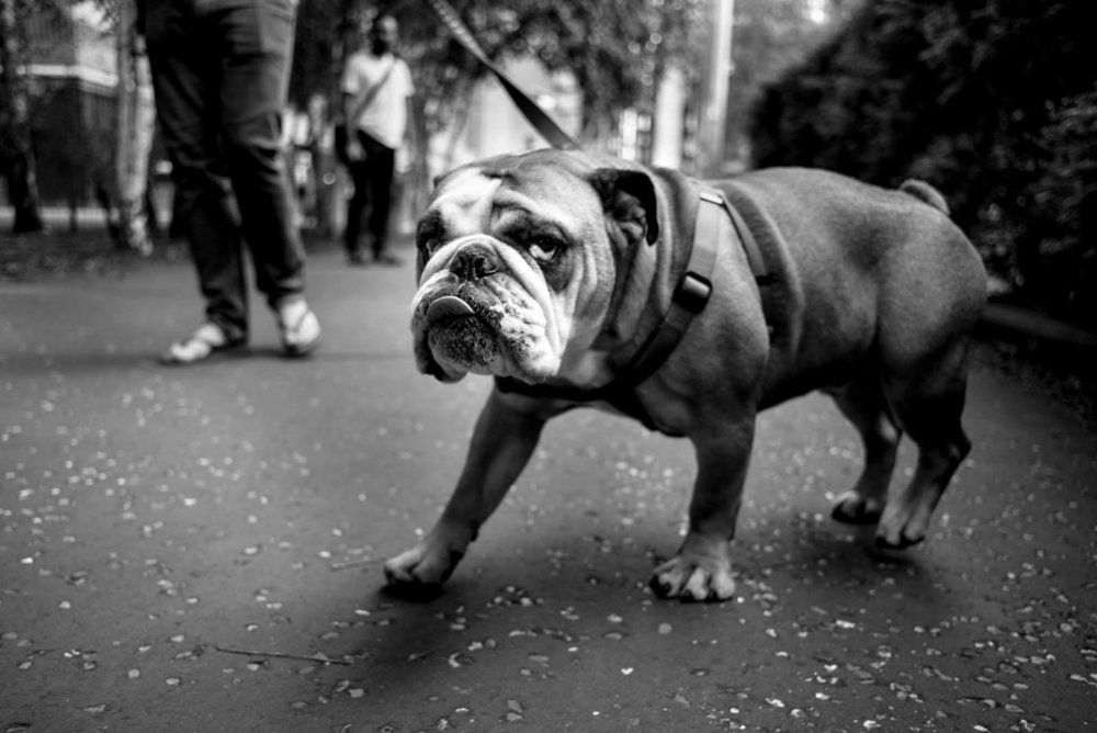 Alan Schaller - Street Photographer - Dogs 18.jpg