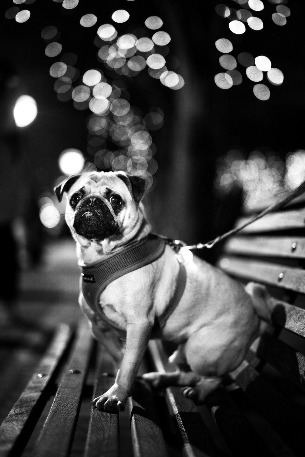 Alan Schaller - Street Photographer - Dogs 21.jpg