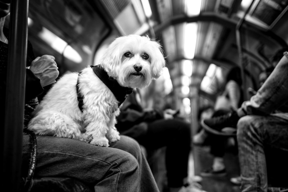Alan Schaller - Street Photographer - Dogs 24.jpg