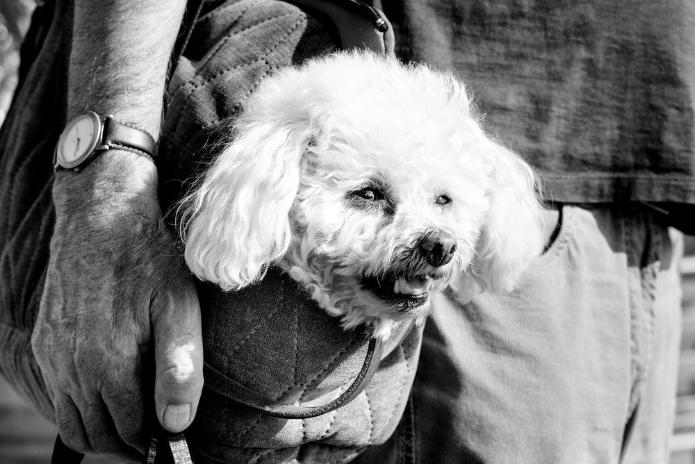 Alan Schaller - Street Photographer - Dogs 27.jpg