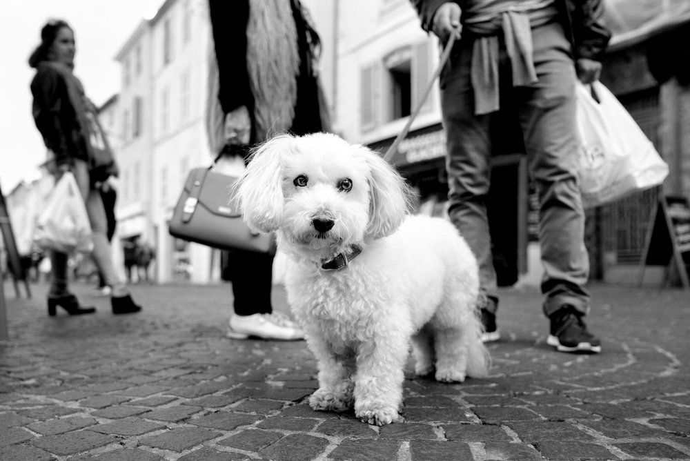 Alan Schaller - Street Photographer - Dogs 29.jpg