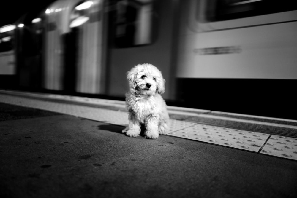 Alan Schaller - Street Photographer - Dogs 31.jpg
