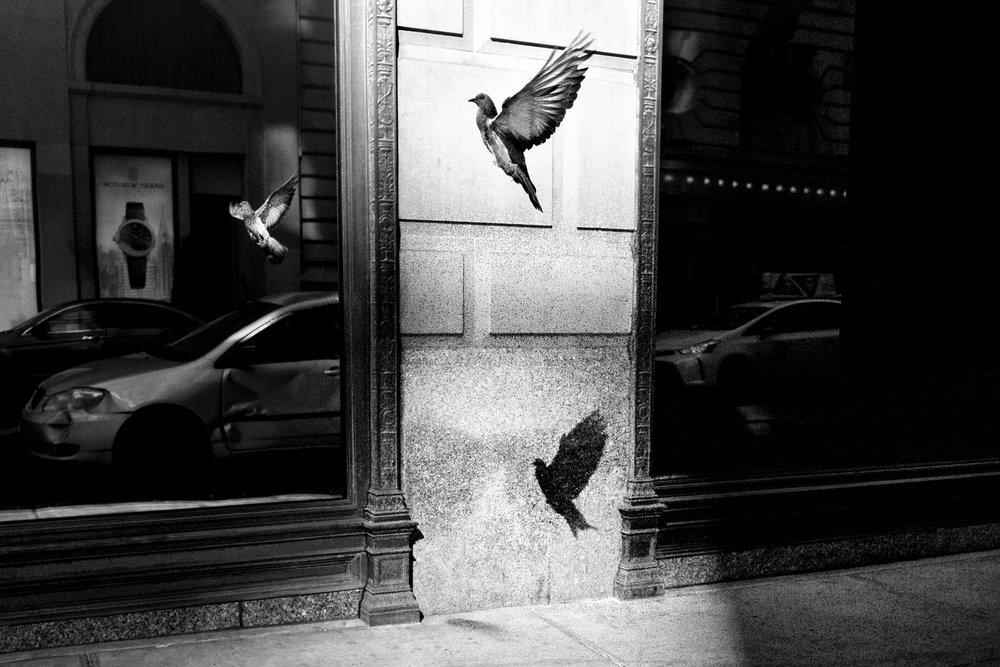 Alan Schaller Manhattan 1.jpg