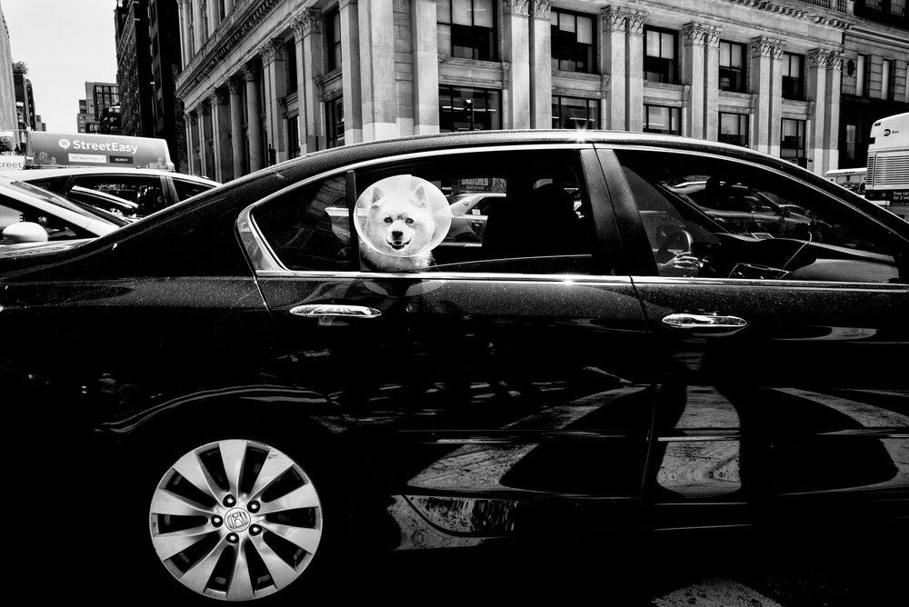 Alan Schaller Manhattan 11.jpg