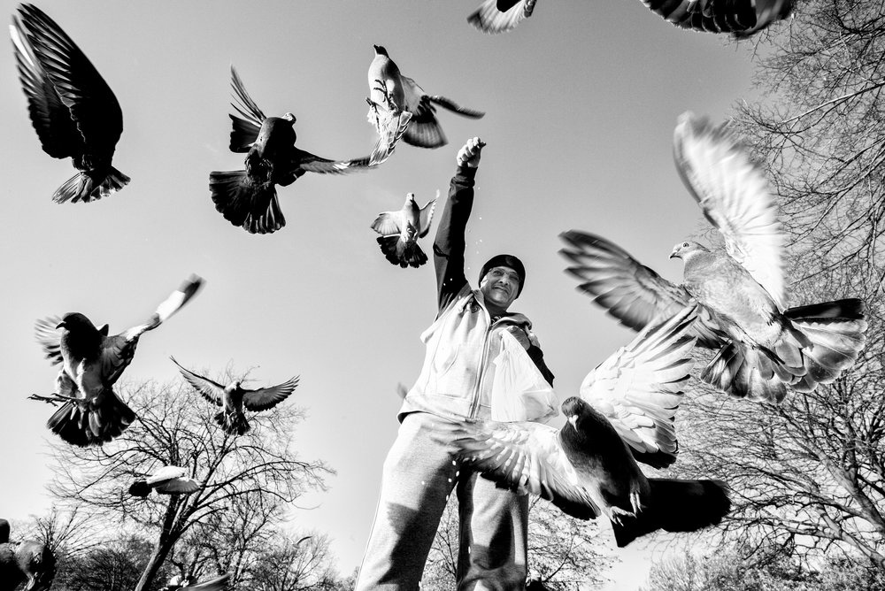 Pigeon Series - Alan Schaller - 4.jpg