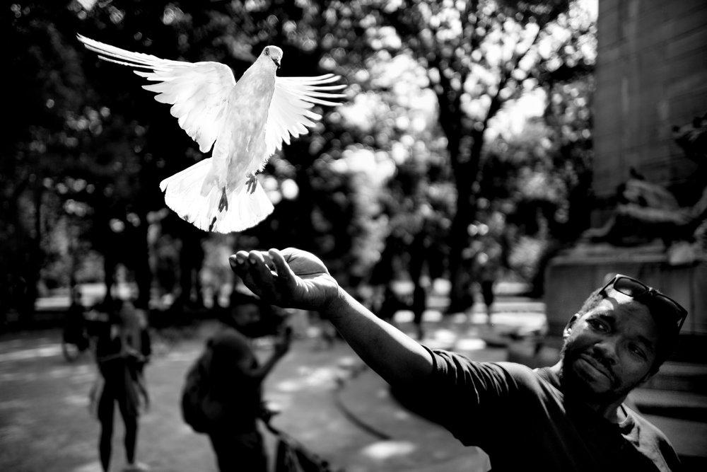 Pigeon Series - Alan Schaller - 8.jpg